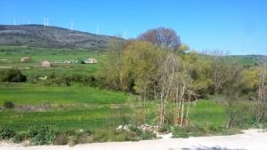mural-suellacabras-jardin-alpartgata (2)